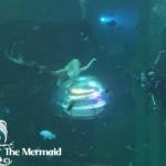 Fotoshooting beim Meerjungfrauen-Treffen von