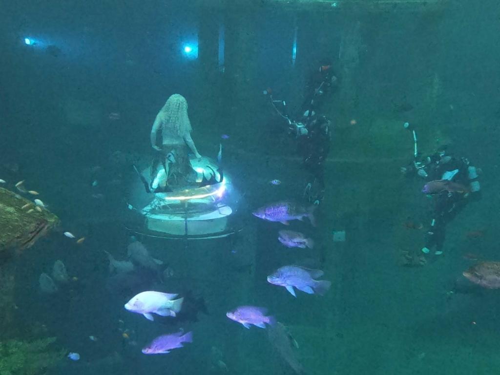 Meerjungfrauen-Shooting im Todi Tauchcenter.